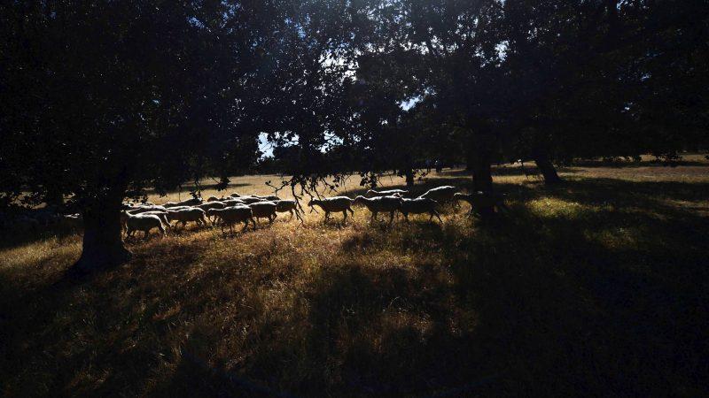La dehesa, un ejemplo ibérico de sostenibilidad y equilibrio natural